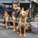 Благотворительный фестиваль в помощь бездомным животным «Хочу домой. БАНО «Эко»