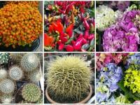 Помощь растениям зимой