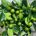 Мандариновые деревья как подарок