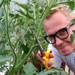 Зачем нужна обрезка томатов? Как правильно произвести и обрезку томатов? Ответы в этом видео!
