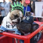 Телеканал «Живая Планета» приглашает на первый костюмированный Парад собак в Москве