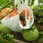 Спасаем растения от мучнистой росы и продлеваем урожай!