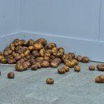 Art Russia — первая ярмарка современного искусства в Гостином дворе