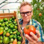 Рецепт зелёных помидор