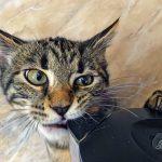 1 Марта — день кошек в России