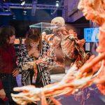 Выставка «BODY WORLDS. Мир тела» примет участие  во Всероссийской акции «Ночь музеев» 18+